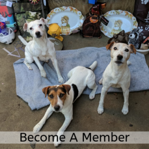 SCJRTC_ Become A Member